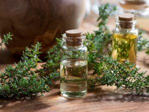 Cỏ xạ hương có giá trị lớn về mặt tinh thần cũng như y học