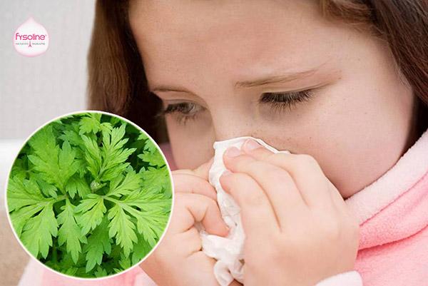Lá ngải cứu chữa viêm mũi dị ứng cho trẻ