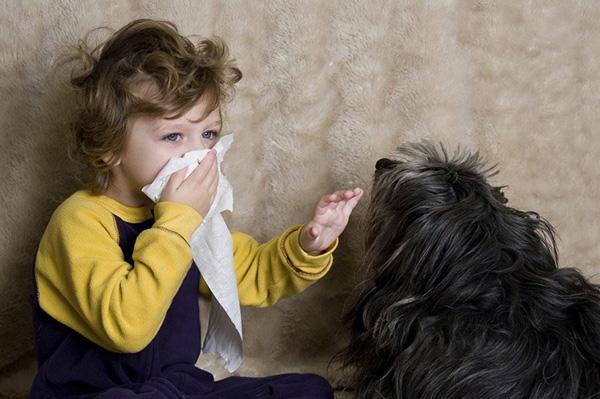 sổ mũi ở trẻ nhỏ do dị ứng lông chó